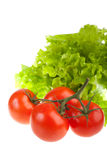Ripe red tomatoes and green leaves of salad. Stock Images