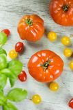 Ripe red tomatoes with potted fresh basil Stock Photo