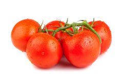 Ripe red tomatoes with water drops Royalty Free Stock Photo
