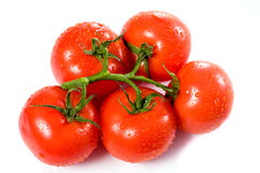 Ripe red tomatoes with water drops over white Stock Image