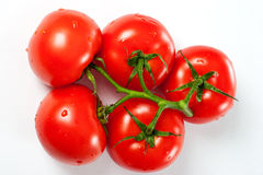 Ripe red tomatoes with water drops over white Royalty Free Stock Image