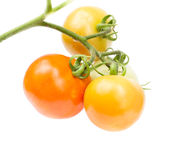 Ripe red and unripe green tomatoes Royalty Free Stock Images