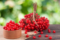 Ripe red viburnum berries in a wooden bowl on table with blurred garden background Stock Image
