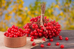 Ripe red viburnum berries in a wooden bowl on table with blurred garden background Royalty Free Stock Image