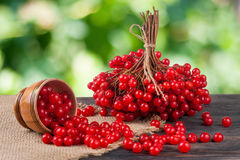 Ripe red viburnum berries in a wooden bowl on table with blurred garden background Royalty Free Stock Photo