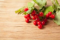 Ripe red viburnum Royalty Free Stock Photography