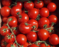 Ripe Red Vine Tomatoes. Fresh ripe and very red tomatoes on the vine and in a box royalty free stock photography