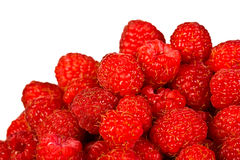 Ripe  red wild raspberries Royalty Free Stock Photo