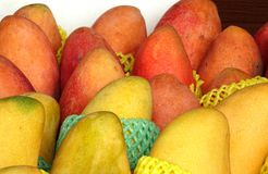 Ripe Red and Yellow Mangoes for Sale Stock Photos