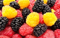 Ripe red and yellow raspberry mulberry Royalty Free Stock Photo