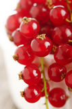 Ripe redcurrant Royalty Free Stock Image