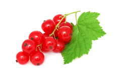 Ripe redcurrant with green leaf (isolated) Royalty Free Stock Photography