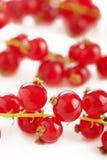 Ripe redcurrant isolated on white background Royalty Free Stock Photo