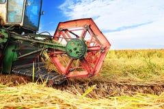 Ripe rice harvesting Royalty Free Stock Photos