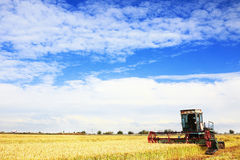 Ripe rice harvesting Royalty Free Stock Images