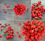 Ripe rose hip berries Royalty Free Stock Photo