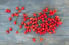 Ripe rose hip berries Stock Photo