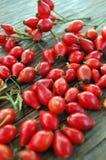 Ripe rose hip berries Stock Image