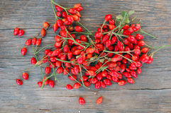 Ripe rose hip berries Stock Photos