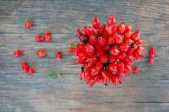 Ripe rose hip berries Royalty Free Stock Photo