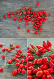 Ripe rose hip berries Royalty Free Stock Photography