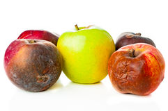 Ripe and rotten apples Stock Image