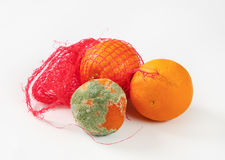 Ripe and rotten oranges Stock Photography