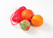 Ripe and rotten oranges Royalty Free Stock Image