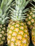 Sarawak `s pineapple for sell royalty free stock image