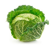 Ripe Savoy Cabbage Isolated on White Stock Photo