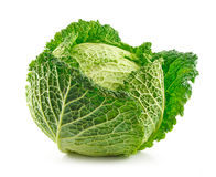 Ripe Savoy Cabbage Isolated on White Stock Image