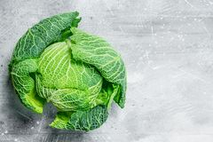 Ripe savoy cabbage stock photos