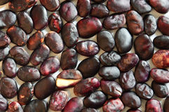 Ripe seeds beans on a light background. Ripe seeds beans on a dark background.The Family Of Legumes stock image