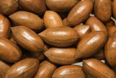 Ripe shiny pecan nuts Royalty Free Stock Photography