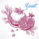 Ripe sketch pomegranate Royalty Free Stock Photography