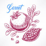 Ripe sketch pomegranate - 2 Royalty Free Stock Image