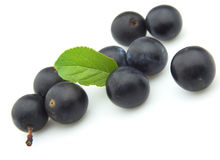 Ripe sloe Stock Photos