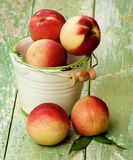 Ripe Small Nectarines Royalty Free Stock Image