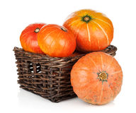 Ripe small pumpkins Royalty Free Stock Images