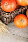 Ripe small pumpkins in basket Royalty Free Stock Images
