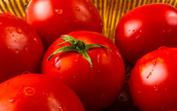 ripe small tomatoes Royalty Free Stock Photo
