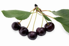 Ripe sour cherry Royalty Free Stock Image