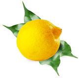Ripe sour lemon with leaves Stock Photo