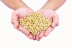 Ripe soya bean on isolated background Royalty Free Stock Photography