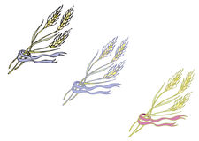 Ripe spikelets cereal Royalty Free Stock Photo