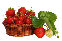 Ripe strawberries. Strawberries in a basket with leaves plants Royalty Free Stock Photography