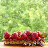 Ripe strawberries in a basket near the window. Rain drops on the glass. Stock Images