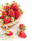 Ripe strawberries in the basket Stock Image
