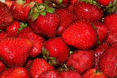 Ripe strawberries. Royalty Free Stock Image