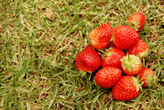 Ripe strawberries on grass Stock Photo